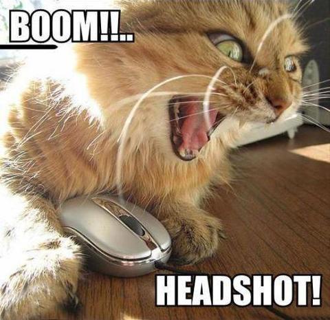 KittyHeadshot Thumb-11