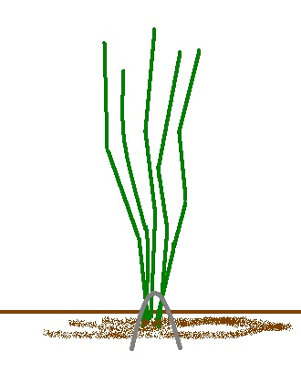Plantation Sans_t10