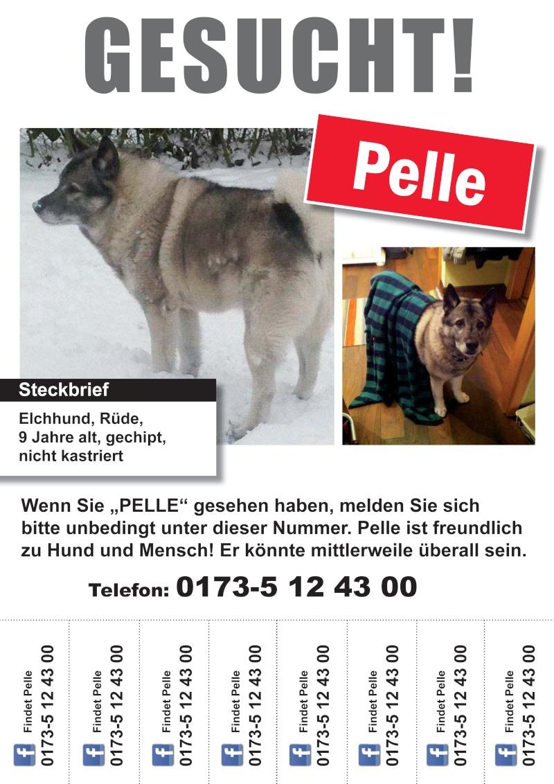 Pelle Elchhund wird deutschlandweit gesucht Pelle_13