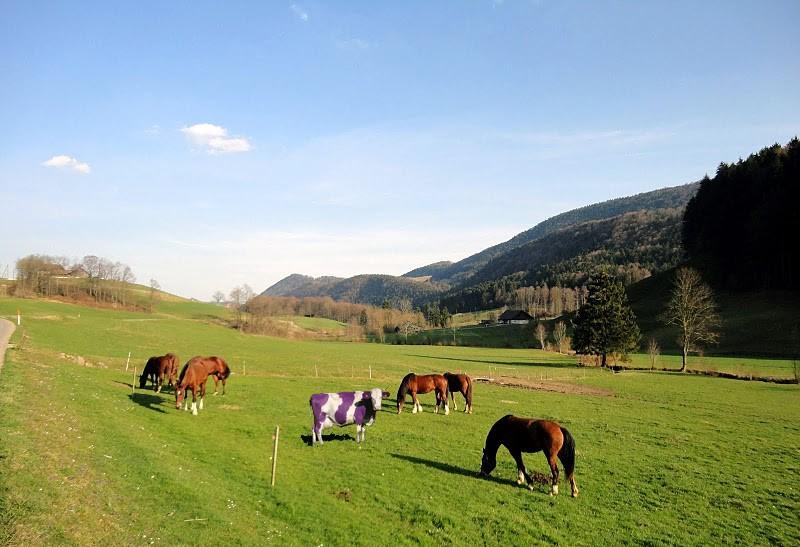 Hier l'Alsace, aujourd'hui la Chuisse allemande Dsc02210