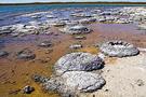 Le salon des paléontologues Stroma10