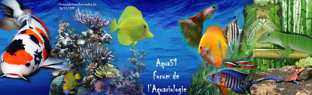 www.aqua51.fr/