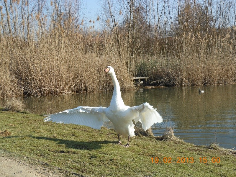 Au bord de l'étang Il_ten10