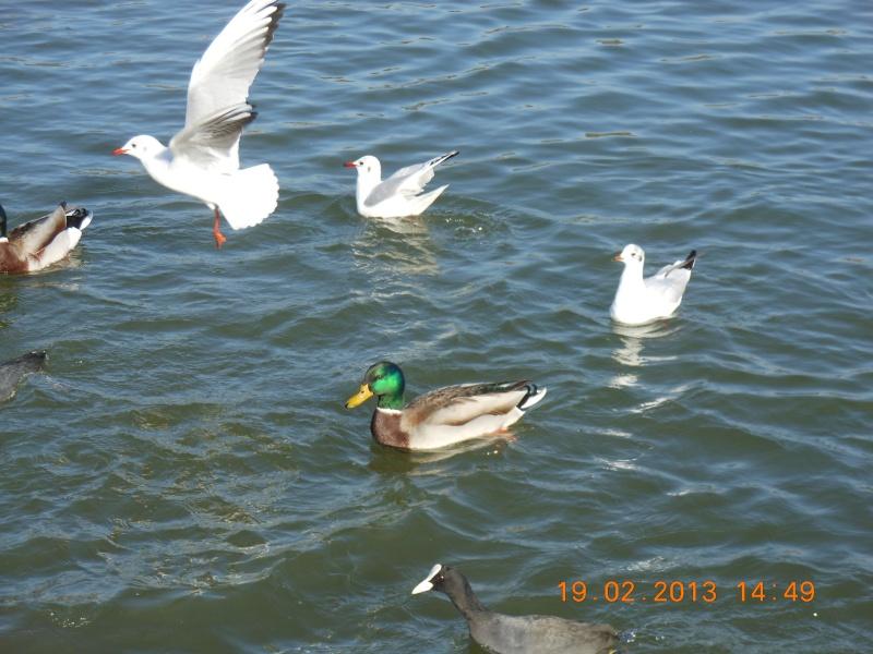 Au bord de l'étang L_envo10