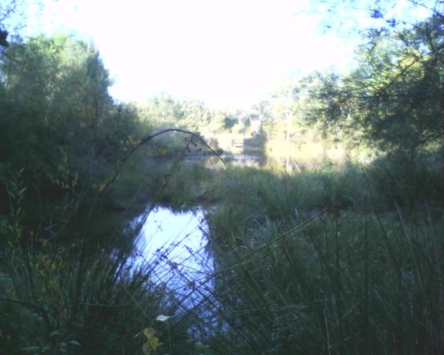 L'étang 01310