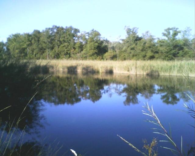 L'étang 01610