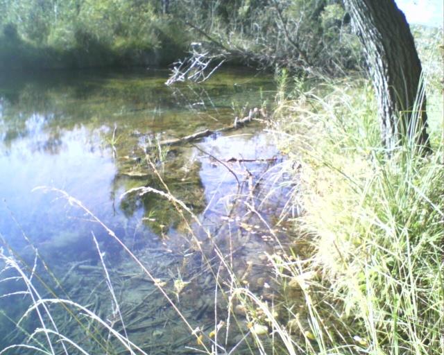 L'étang 01713