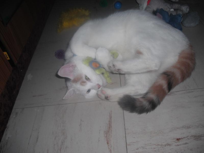 TIANA - 8 mois - Femelle tricolore Dscf0712