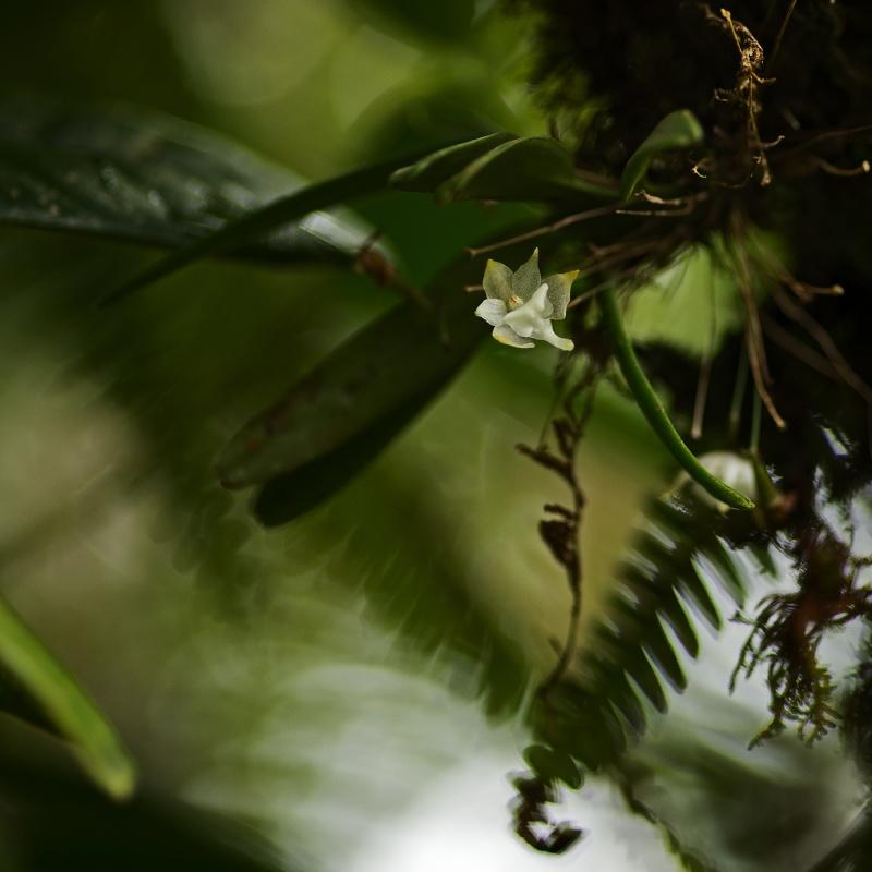 Orchidées sauvages de mon île 18032011
