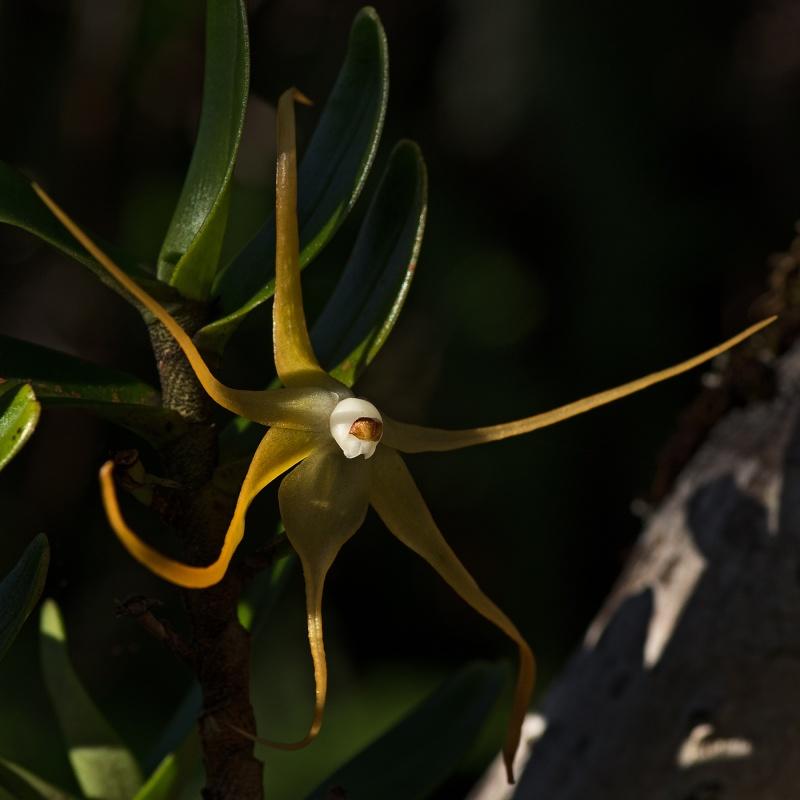 Orchidées sauvages de mon île 28032011
