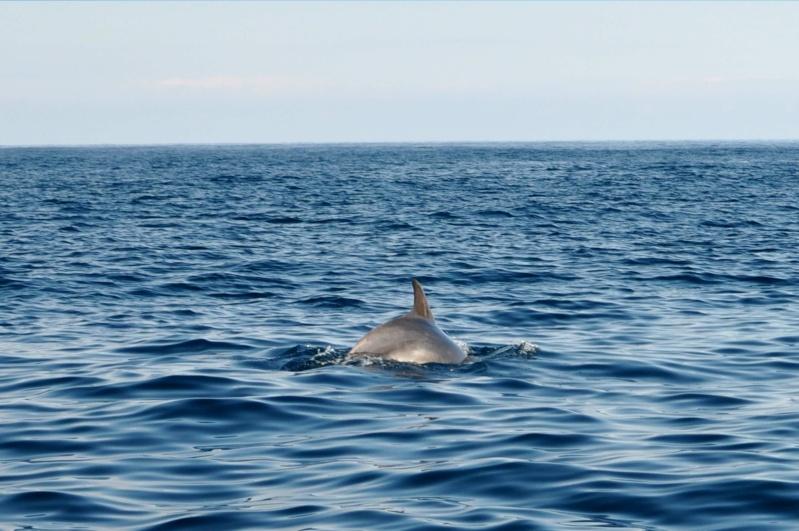 REPORT VJ ed INCHIKU 2013 - OLTRE OGNI LIMITE Delfin10