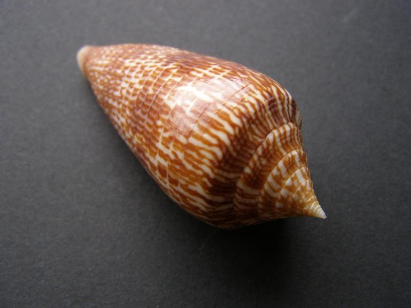 Les cones des Philippines... P3228417