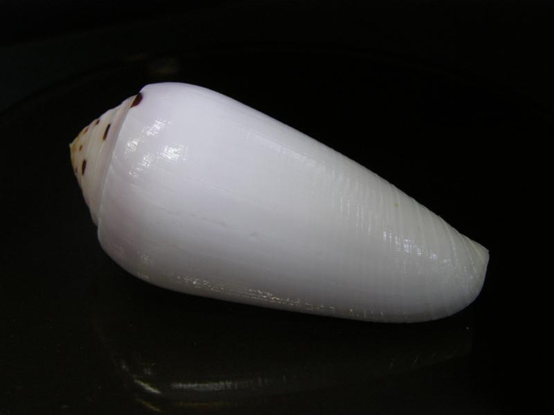 Les cones des Philippines... P4104312