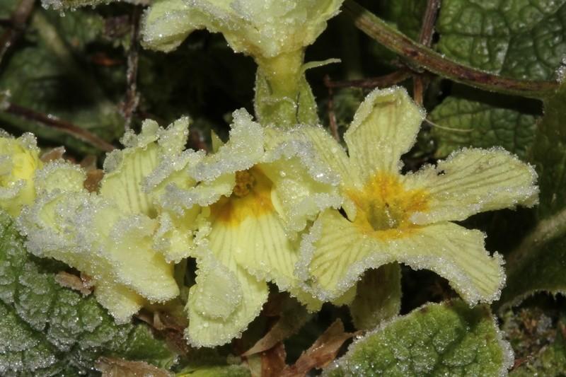 En attendant les 1ères orchidées... 1511