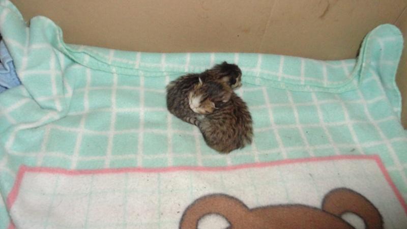 Les bébés de Chipie :d Dsc01410