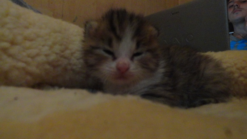 Les bébés de Chipie :d Dsc01413