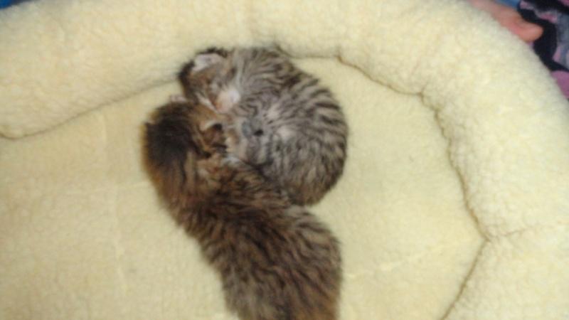 Les bébés de Chipie :d Dsc01414