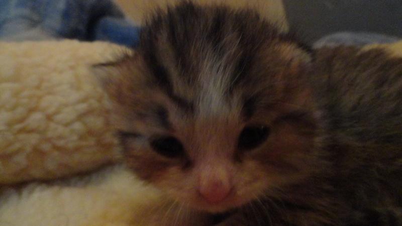 Les bébés de Chipie :d Dsc01415