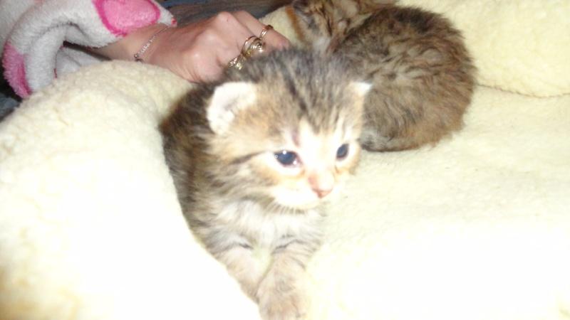 Les bébés de Chipie :d Dsc01416