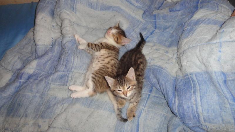 Les bébés de Chipie :d Dsc01417