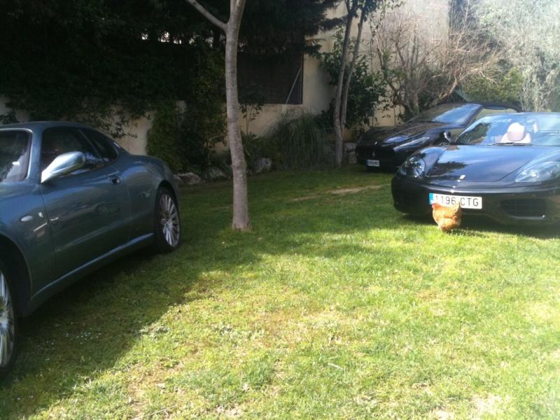 strano parcheggiatore nel mio giardino La_fot17