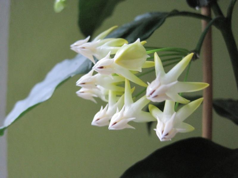 Blüten 2013 Frahja12