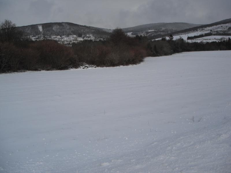 notre hivernale 12 janvier 2013 - Page 16 Dscf2815