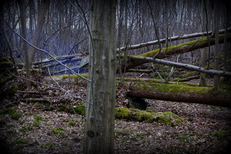 Dans une forêt de Seine et Marne Amenag11