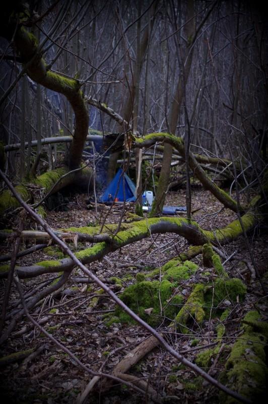 Dans une forêt de Seine et Marne Positi10