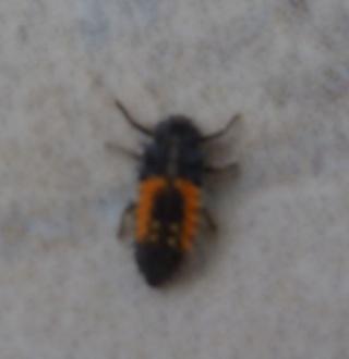 Ma passion de l'entomologie. P1030112