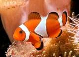 Aquarium 30L Poisso11