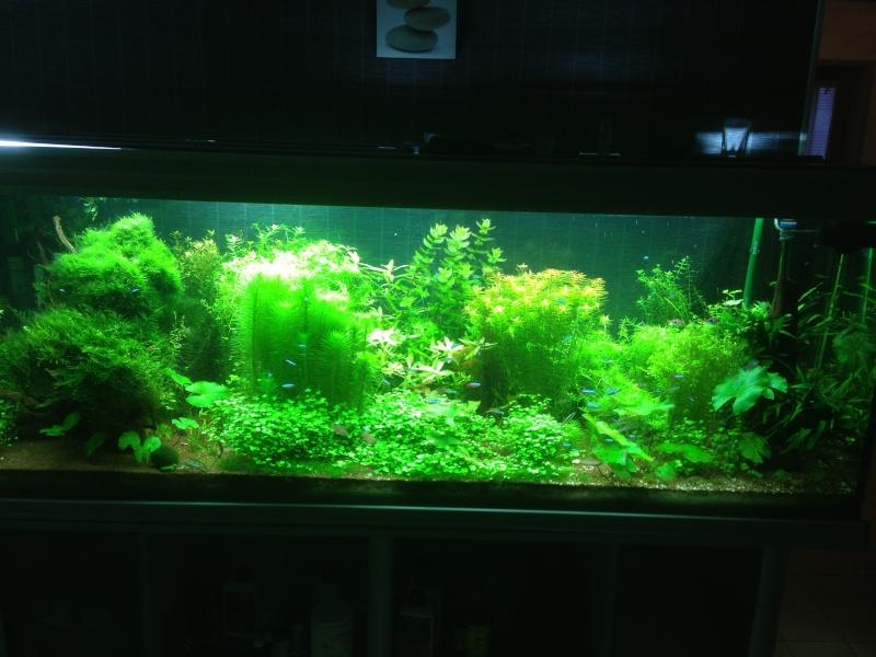 840L Amazonien Img_0219