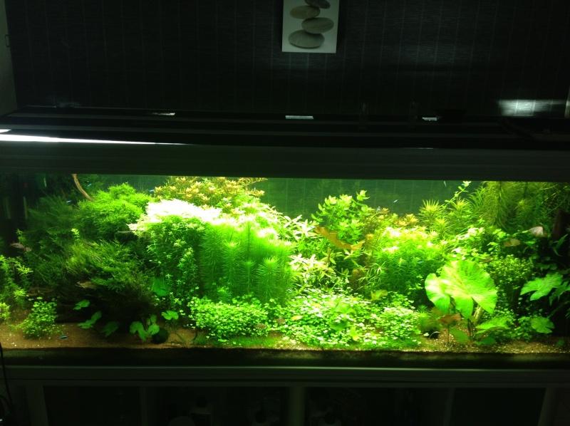 840L Amazonien Photo110