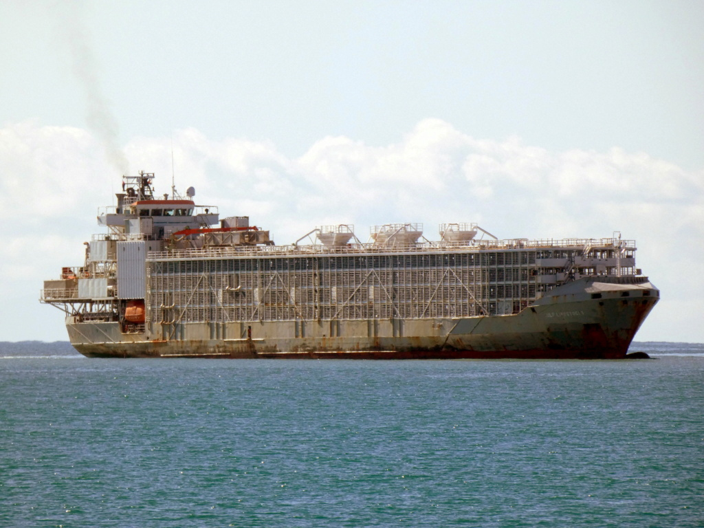 Livestock carrier in load with 43 crew disappeared after iss Gulf_l10