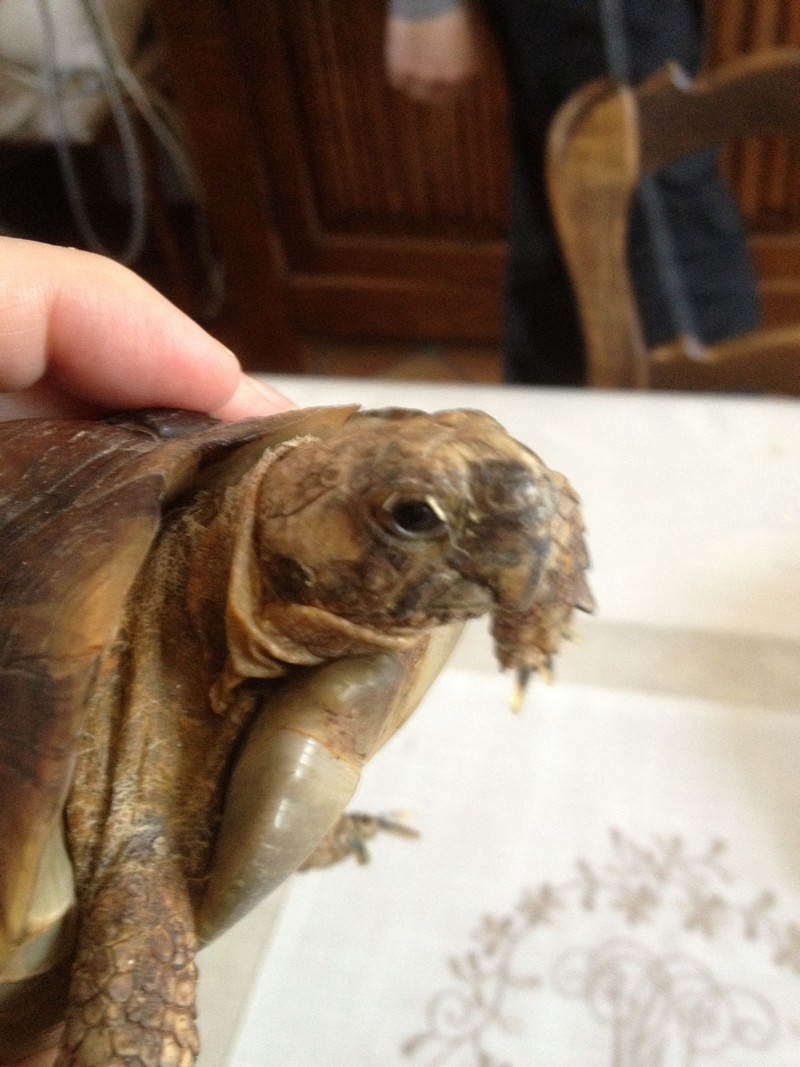 Tortue que l'on veut me donner Pepere10
