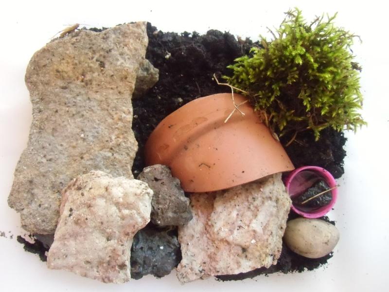 le terra de mes scorpions (Euscorpius flavicaudis) Cimg0121