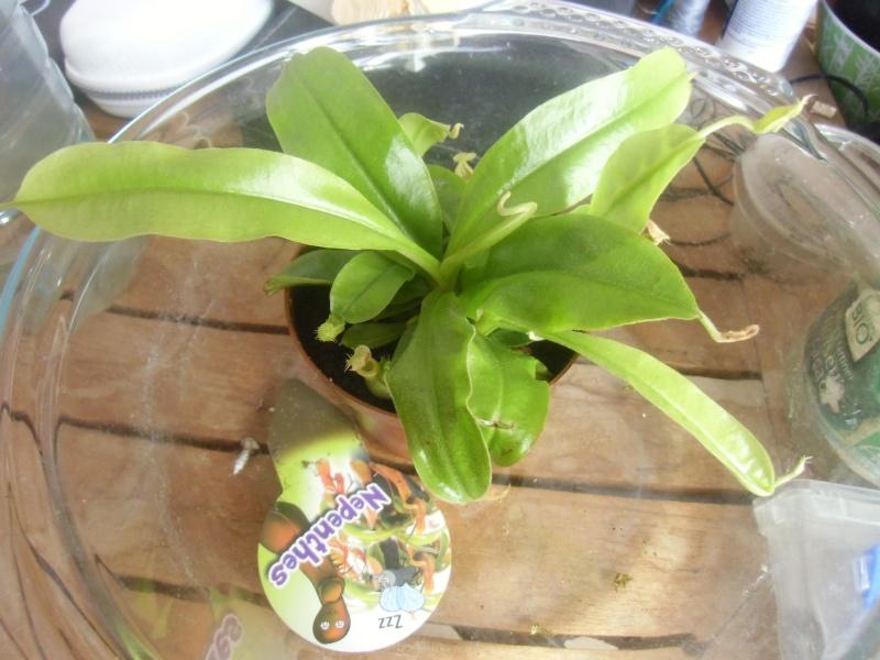 mes plantes carnivores a moi Cimg0321