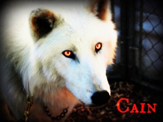 Cain   Axis Pack Cain10