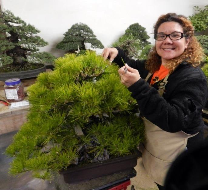 Martha Choy Project- Bonsai Study in Japan  Facebo10