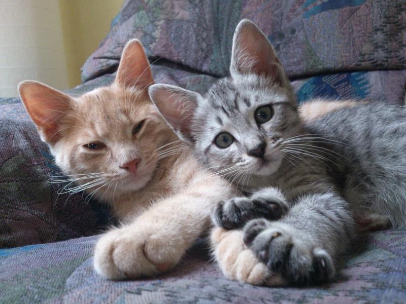 Dexter et Miss NoName :D 24053611