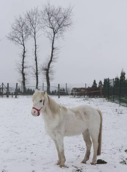 """jusqu'au 24 mars pour voter pour le concours photo """" vos chevaux dans la neige 2013 """" n°2 Betty_12"""