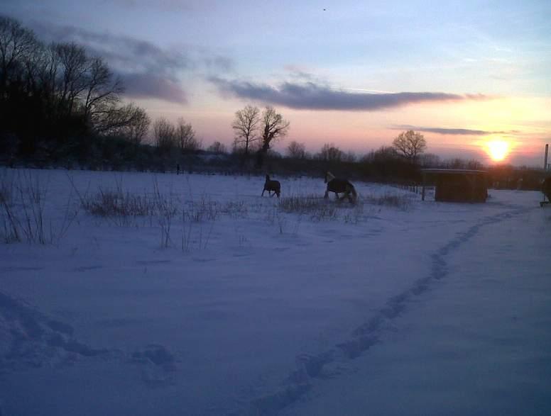 """jusqu'au 24 mars pour voter pour le concours photo """" vos chevaux dans la neige 2013 """" n°2 Coucha12"""