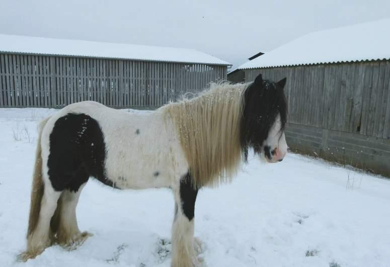 """jusqu'au 24 mars pour voter pour le concours photo """" vos chevaux dans la neige 2013 """" n°2 Cyrano11"""