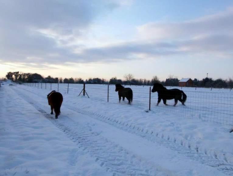"""jusqu'au 24 mars pour voter pour le concours photo """" vos chevaux dans la neige 2013 """" n°2 De_gau11"""