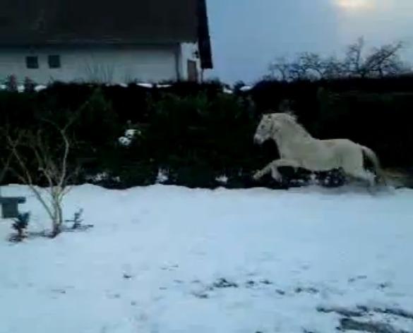 """jusqu'au 24 mars pour voter pour le concours photo """" vos chevaux dans la neige 2013 """" n°1 De_gwl11"""