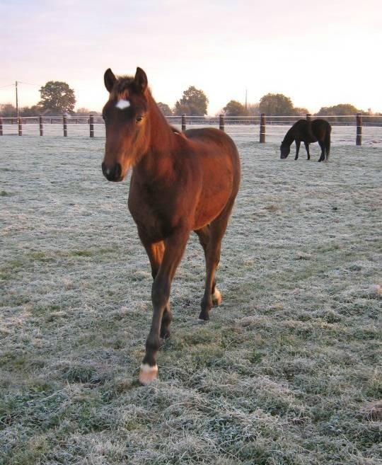 """jusqu'au 24 mars pour voter pour le concours photo """" vos chevaux dans la neige 2013 """" n°1 De_soa11"""