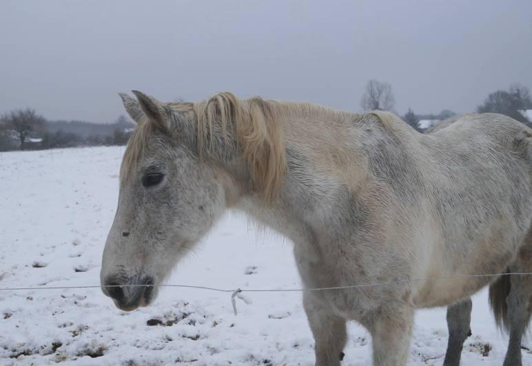 """jusqu'au 24 mars pour voter pour le concours photo """" vos chevaux dans la neige 2013 """" n°1 Hirond11"""
