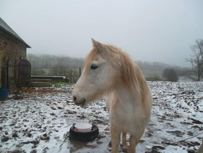 """jusqu'au 24 mars pour voter pour le concours photo """" vos chevaux dans la neige 2013 """" n°1 Kim_la11"""