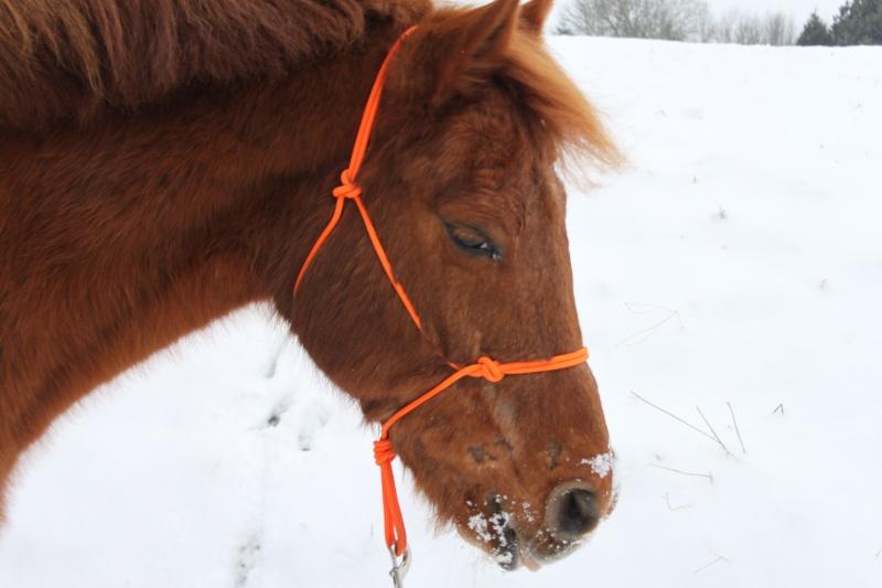 """jusqu'au 24 mars pour voter pour le concours photo """" vos chevaux dans la neige 2013 """" n°1 Lana_d11"""