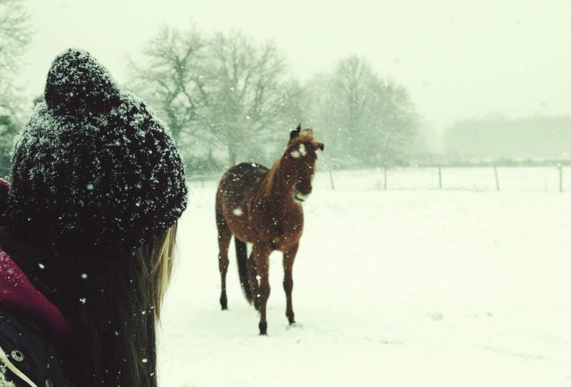 """jusqu'au 24 mars pour voter pour le concours photo """" vos chevaux dans la neige 2013 """" n°1 Par_cl11"""